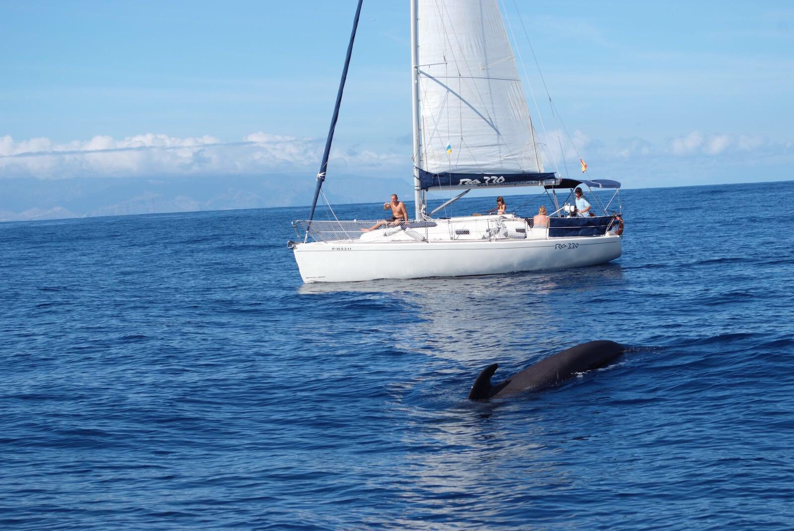 Boat Tours, Surfing, Submarine, Jetski