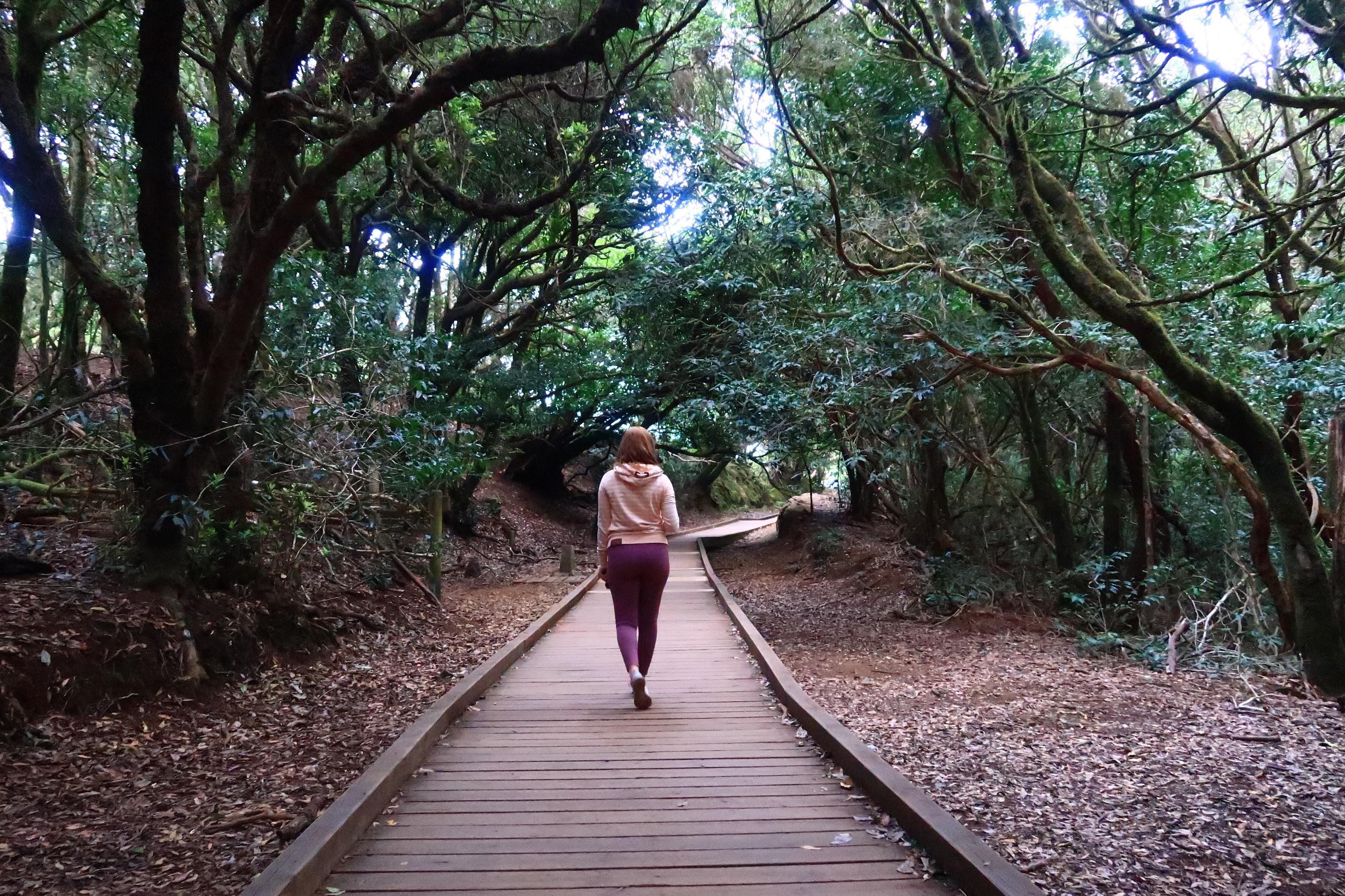 Anaga-La Laguna Hiking